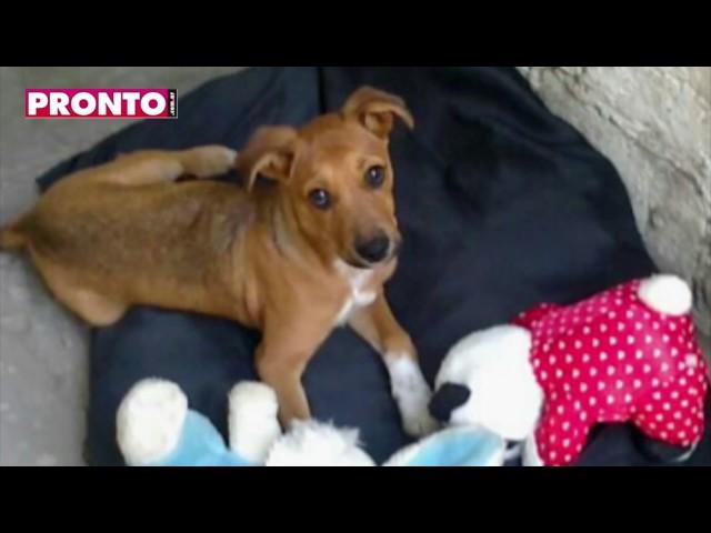 Estas son las mascotas del Team PRONTO.com.ar