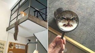Teori - Tüm Kedi Severlerin Bunları Öğrenmek Hakkı