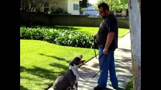 David Utter Dog Master Trainer Behavior Rehabilitation Los Angeles