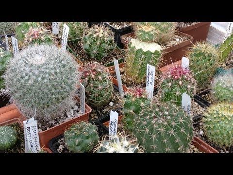 Все о кактусах . Выставка .