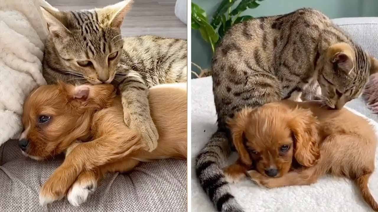 Cat And Puppy Best Of Friends Youtube