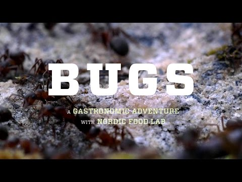 BUGS the film –Will eating insects save our Earth? – official trailer #Tribeca2016