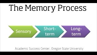 The Memory Process (Segment of the Learning and Memory Video)