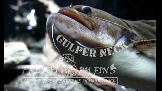 gulper-catfish-man-broke-into-our-shop