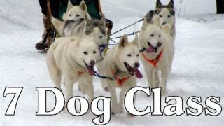 7 Dog Class Clear Lake Sled Dog Races 2012  -  Siberian Husky Mush M.u.s.h. Dog Sledding