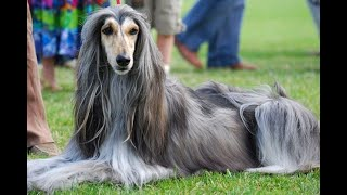 The Most Interesting Dog Breeds