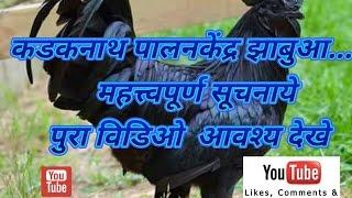 कडकनाथ पालनकेंद्र झाबुआ महत्त्वपूर्ण सूचनाये    पुरा विडिओ  आवश्य देखे kadaknath palan