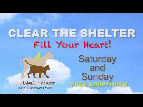 Home - Charleston Animal Society