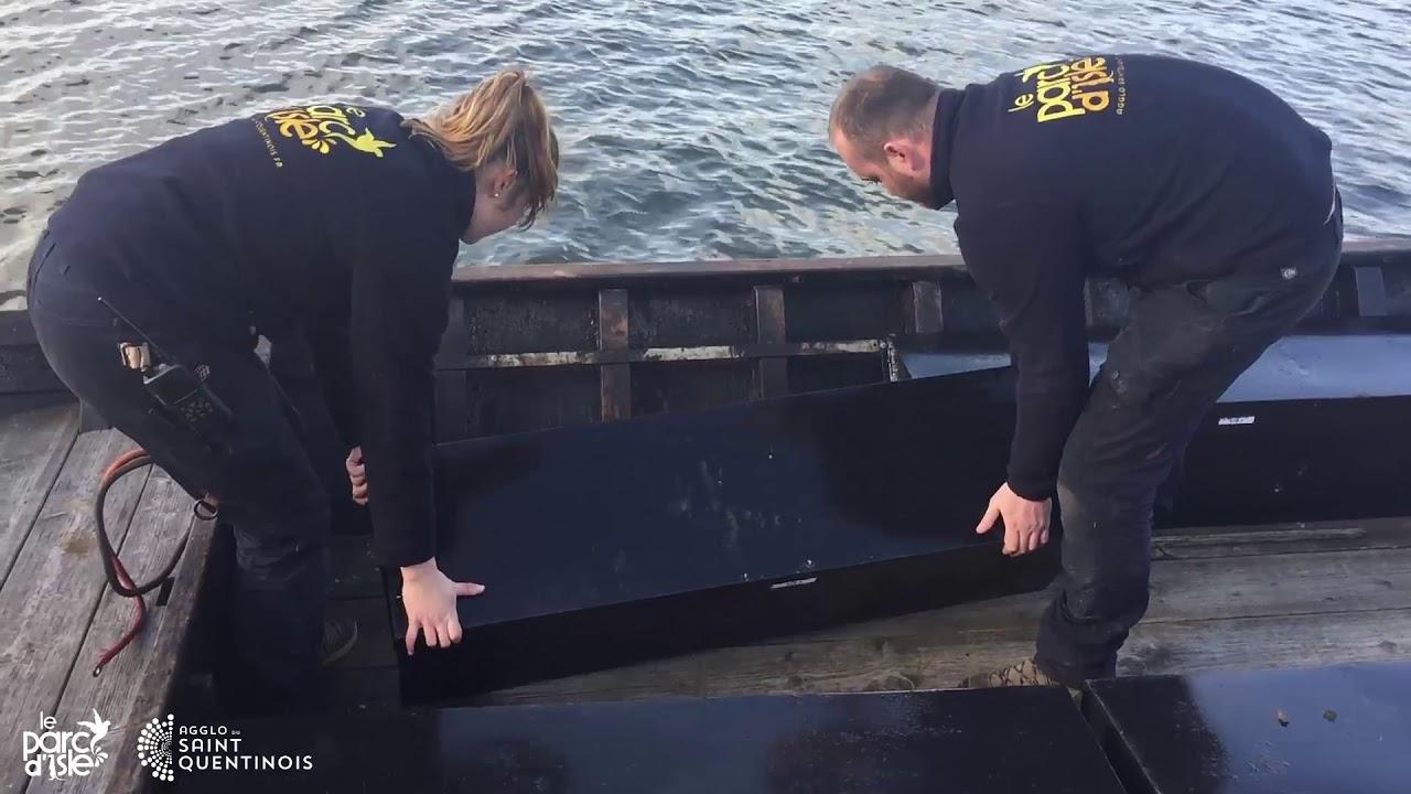 Les bacôves du Parc d'Isle remises à l'eau !