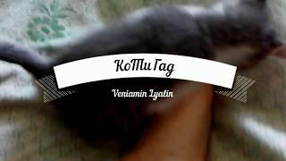 Маленькая Ляля,котенок играет,малекий котенок кусается,приколы с котами,смешоное видео с котиком