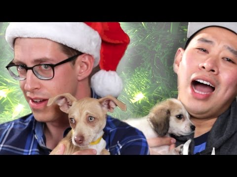Drunk Guys Get Surprised By Puppies