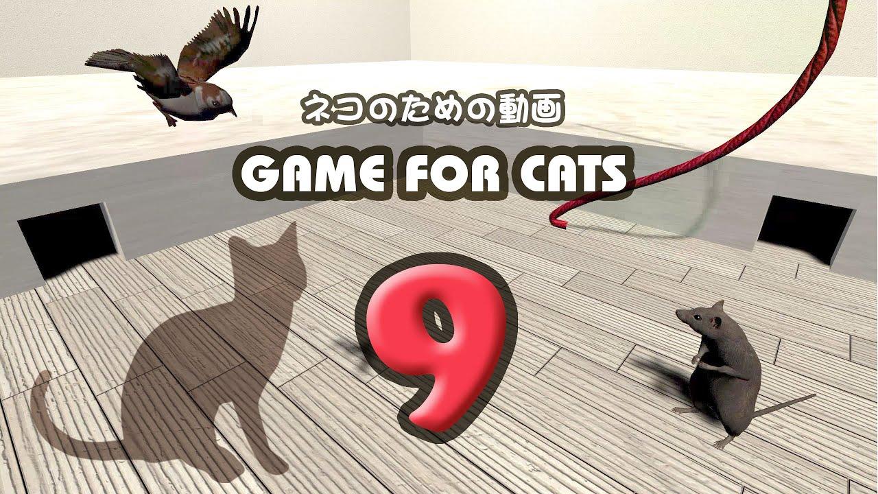 【猫用動画MIX9】ねずみ・ひも・とり30分 GAME FOR CATS 9