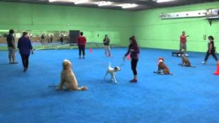 Level 2 Obedience - Group Dog Training Class Miami, Florida