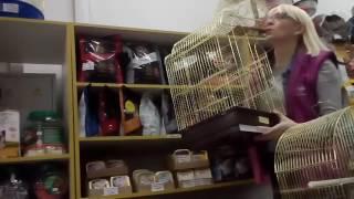 Покупаем клетку,корм и попугая!!!!!!