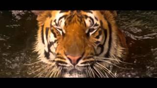 Самый Большой Тигр в Мире Вав