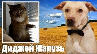 Шарик Шоу - Диджей Жалузь (выпуск 42)