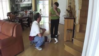 Dressage chien: Cours de maternelle 1 avec un magnifique Basset-Hound
