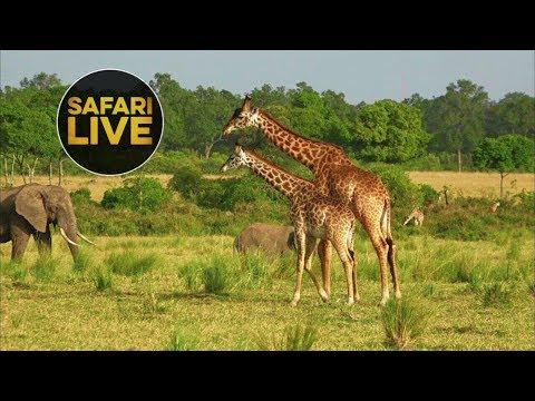 safariLIVE - Sunset Safari - August 7, 2018