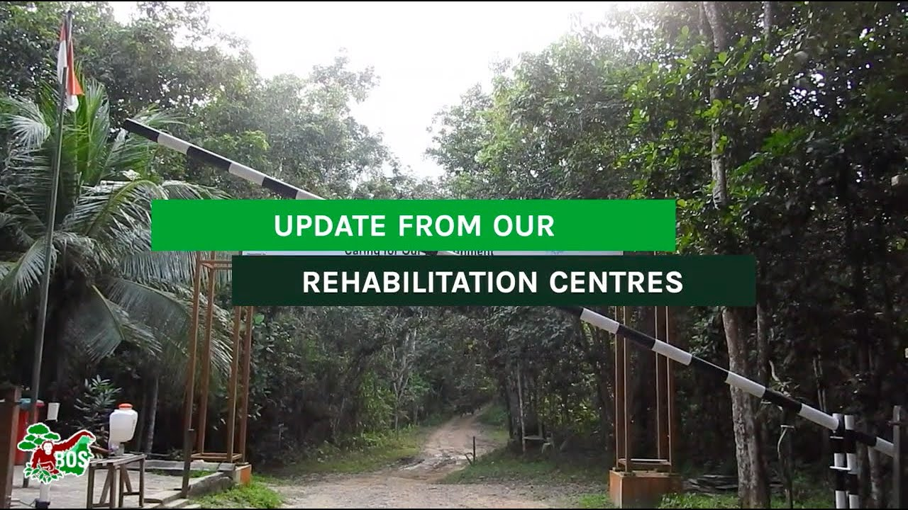 Update from Our Rehabilitation Centres
