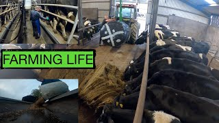 """A DAY IN MY LIFE""  REAL LIFE DAIRY FARMING -- IT'S A LIFESTYLE NOT A JOB --"