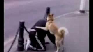 Пёс жарит чувака