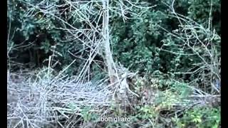 Gonnostramatza - Riu Mannu _ La denuncia del Sindaco Alessio Mandis
