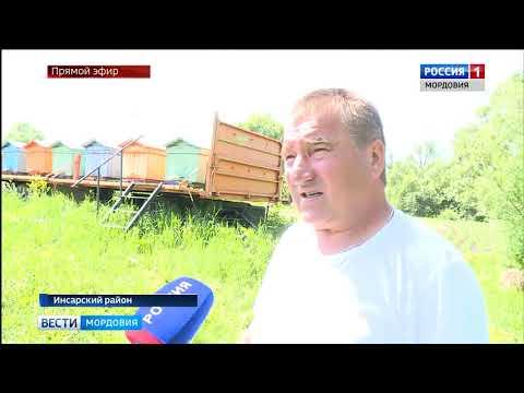 Вопрос: Минсельхоз объявил о массовой гибели пчел в России В чем причина?