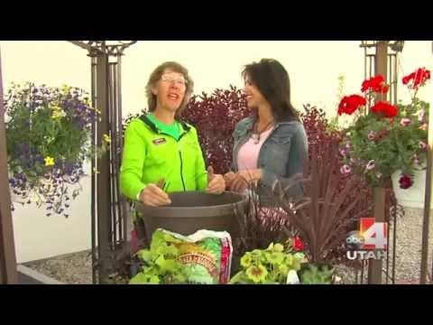 Geraniums & Container Gardens Salt Lake City
