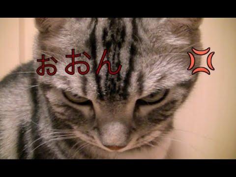 【猫記録241】猫に説教したらすごい顔された