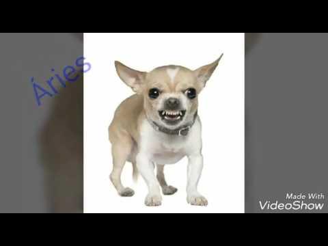 O Dog de Cada Signo - Cachorros