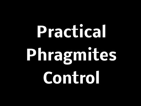Practical Phragmites Control Meeting - Clay Twp Presentation