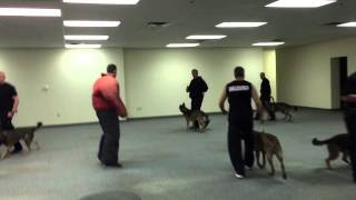"""""""controlled Madness"""" K-9 Dog Training Drill"""