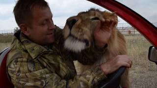 Почему львам нельзя быть толстыми . Как мы обманули Олежку :))