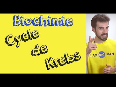 Cours de biochimie: cycle de Krebs