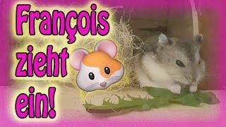 François zieht ein ❤ Zwerghamster Käfig Tour ❤ so süß!!