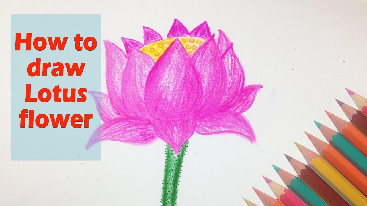 Beautiful Flower Drawing Video