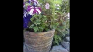 Садовые горшки из бетона мк(Мастер класс по изготовлению красивых садовых горшков для цветов из бетона ( цемент и песок) своими руками., 2015-12-02T08:07:32.000Z)