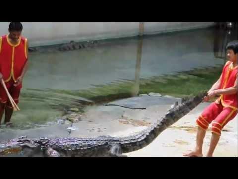 màn xiếc cá sấu tại Thái Lan