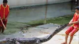 màn xiếc cá sấu tại Thái Lan thumbnail