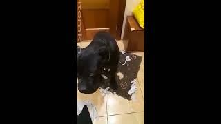 Собака разнесла пол квартиры