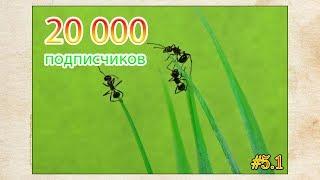 Забрал муравьев ● 20000 подписчиков