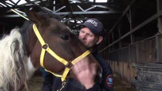 Neglected Horses Rescued in Tennessee