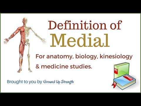 Medial Definition (Anatomy, Kinesiology, Medicine)