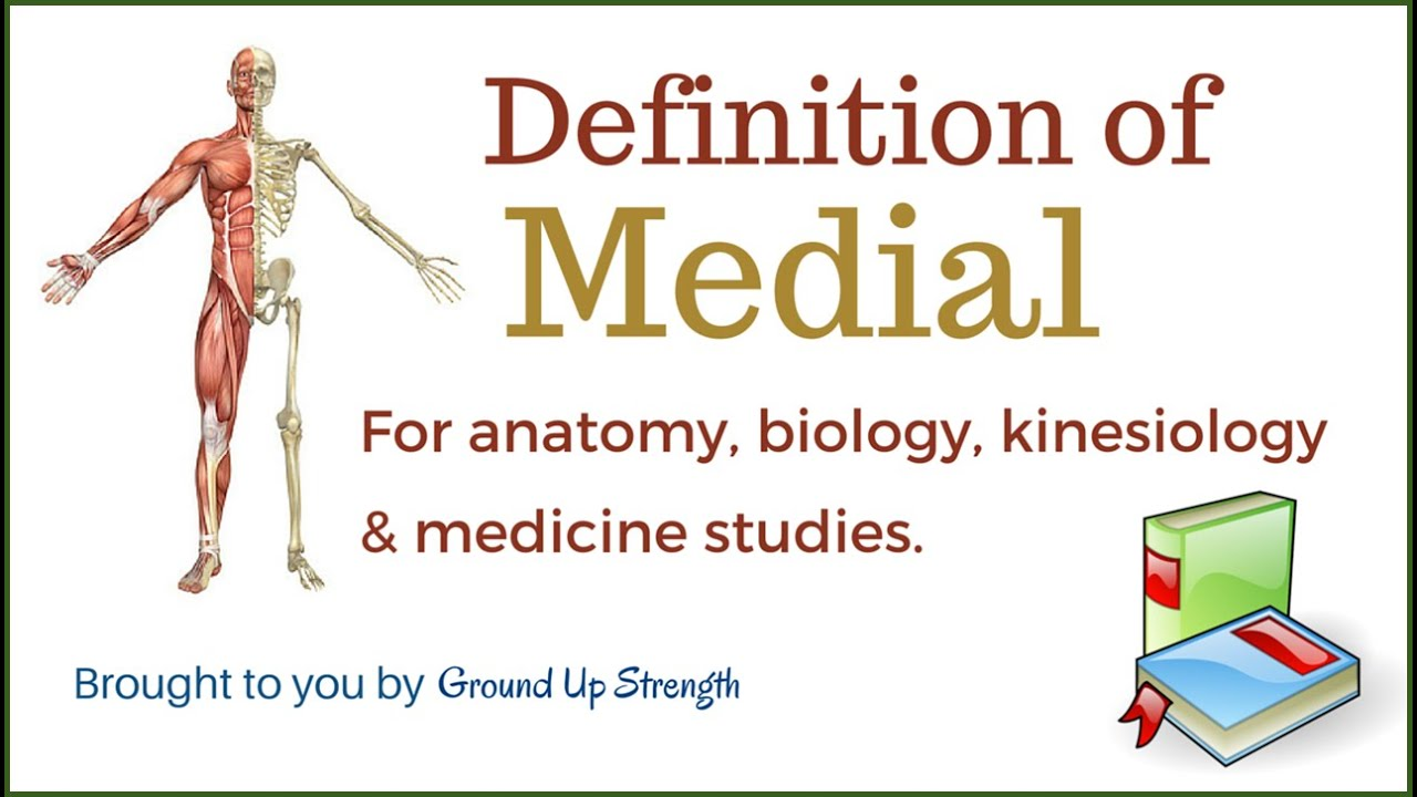 Medial Definition Anatomy Kinesiology Medicine Youtube