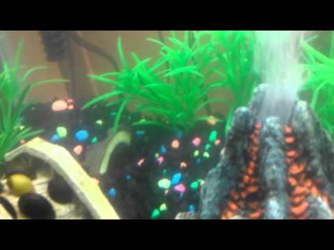New Volcano in fish tank 20 gallon