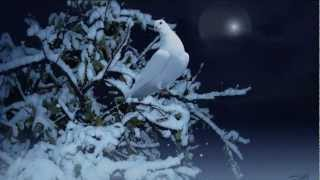 Oh Holy Night - Trumpet and Organ Instrumental