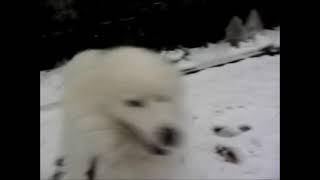 2012年2月29日、雪の公園でワホ~♪ 都心でこれくらい積もるのはめずらし...