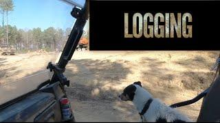 LOGGING 👍👍👍at Hollis Farms