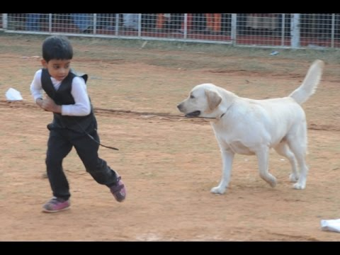 Thrissur Canine Club 25th & 26th All Breeds  Championship Dog Show 2016.