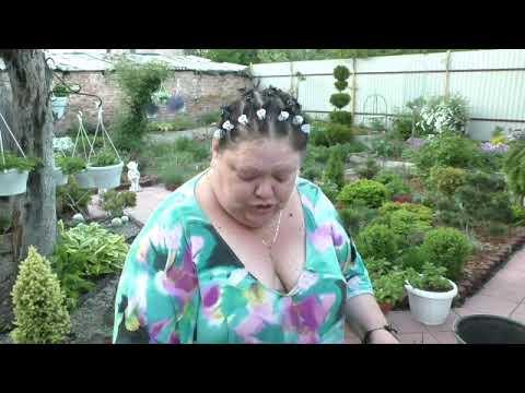обработка сада от вредителей. первая обработка от тли